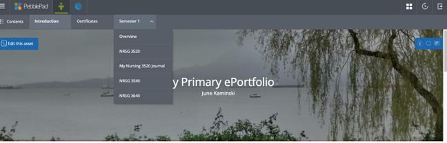 Figure 5: PebblePad ePortfolio Sample (click image for full view)